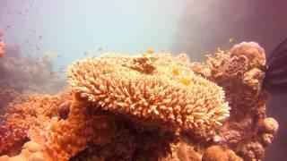 Australia Diving 2016 - Great Barrier Reef