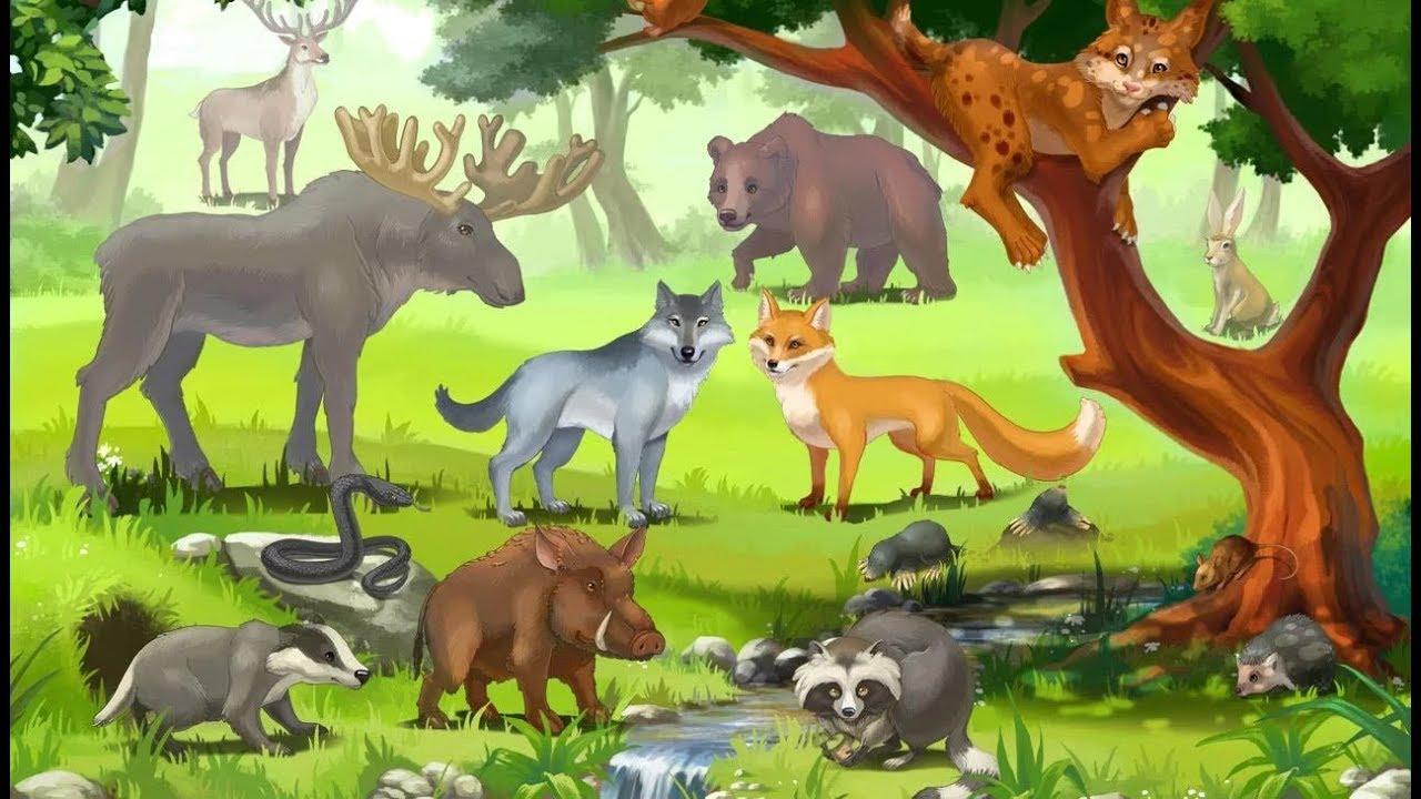 Животные россии фото и описание для детей