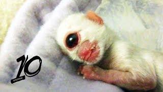 Szokujące mutacje genetyczne zwierząt!