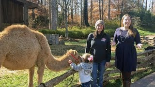 Meet Eva the Camel | Christmas at the Library 2017
