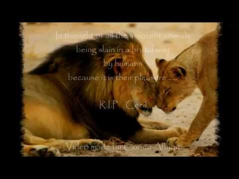 In memory Lion Cecil -   Bill Medley -  He ain't heavy, he's my brother