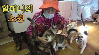 버려진 고양이 강아지 130마리 키우는 할머니 &quo…