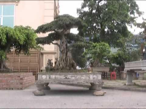 vietbonsai.vn  -  Thăm vườn cảnh Song Long