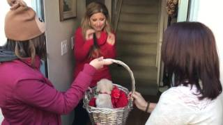 Christmas Puppy Surprise (Love Actually style)