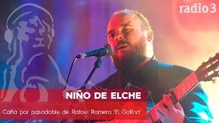 NIÑO DE ELCHE - Caña por pasodoble de Rafael Romero 'El Gallina' | Concierto 40 Constitución