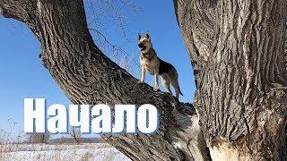 Прогулка с собакой, природа лес, разве это одиночный поход ?