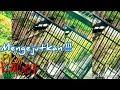 Kacer Gacor Pikat Ampuh  Mp3 - Mp4 Download