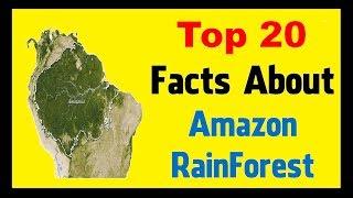 Amazon Rainforest - Unknown Facts