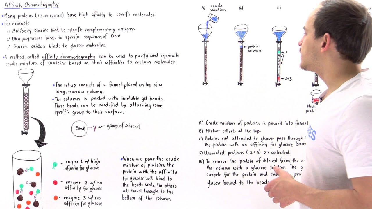 Affinity Chromatography Youtube