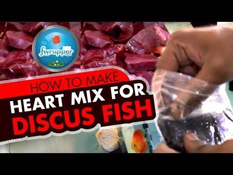 HOW TO : Heart Mix For Discus Fish || How To Feed Discus Fish || Fish Food || DIY