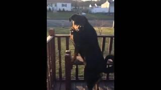Download Zena Barking in slow motion she sounds like a lion