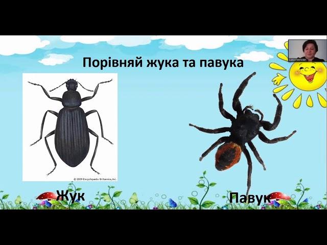1 клас. Я досліджую світ. Досліджуємо комах.