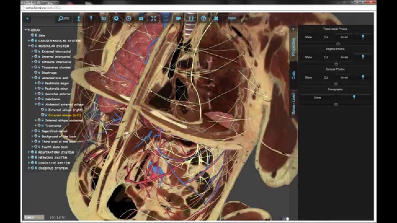 Características de BioTK, atlas de anatomía en 3D preciso y realista ...