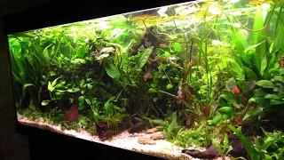 Larscarving-Aquarium Schritt für Schritt neu einrichten  -planted fish tank step by step  setup