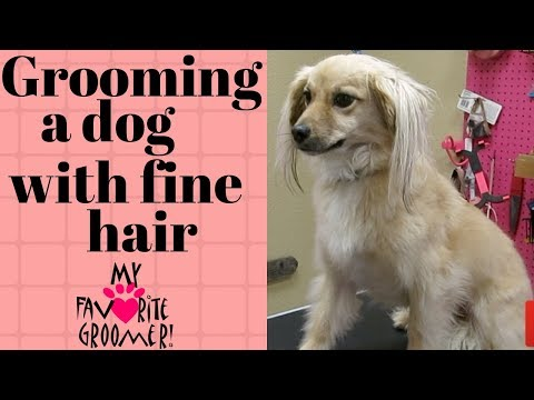 How to groom a dog with fine hair