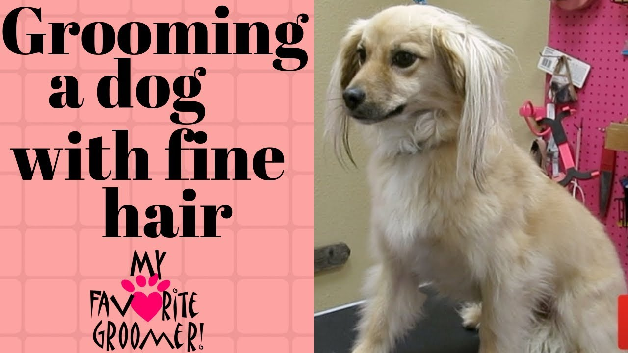How to groom a dog with fine hair Video