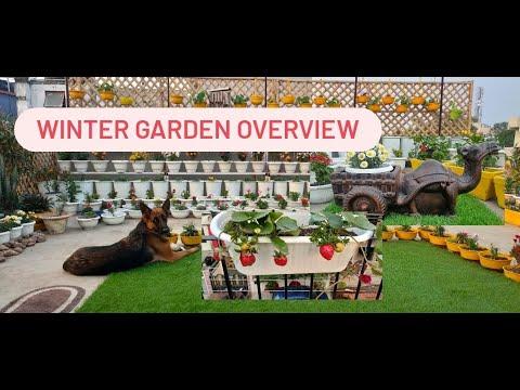 winter garden overview/garden overview 2020//