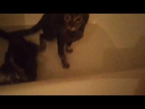 Cats take bath