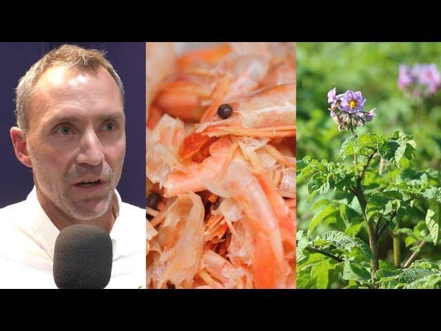 Des exosquelettes de crevettes pour protéger nos cultures !