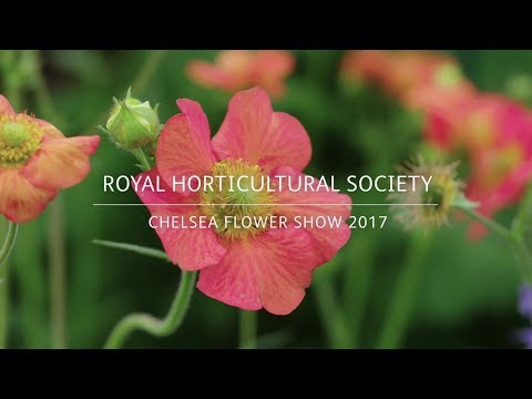 RHS Chelsea Flower Show 2017 | Hardy's Cottage Garden Plants | Herbaceous perennials for city living