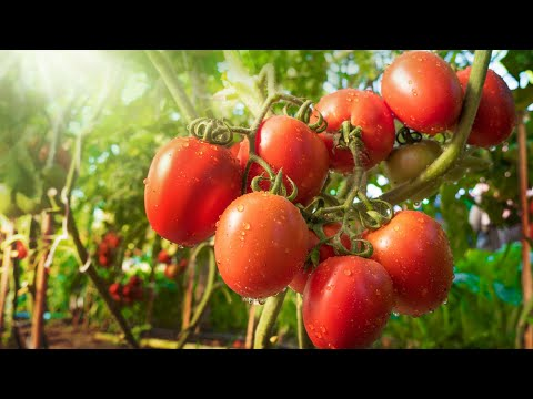 Companion Planting 101: Grow A Better Garden By Pairing Plants