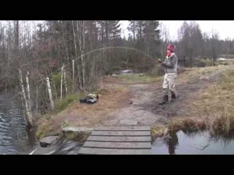 Fly Fishing Rainbow In Strömhult Sweden Youtube