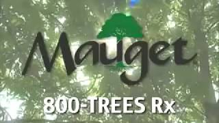 Emerald Ash Borer and Mauget Management