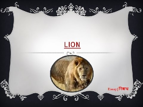 An Essay on 'Lion' for Kids in English Language