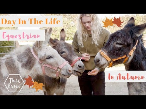 Day In The Life of an Equestrian in Autumn   Donkey Grooming and Pony Pumpkins   This Esme
