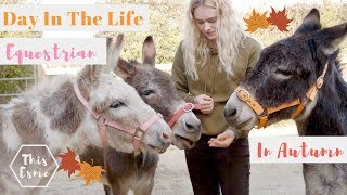 Day In The Life of an Equestrian in Autumn | Donkey Grooming and Pony Pumpkins | This Esme
