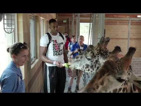 Dwight Howard Feeds Giraffes!