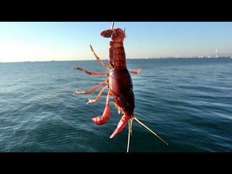 堤防の足元にザリガニを落としたら予想外の魚が釣れた!