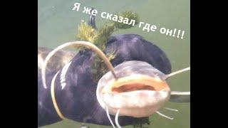 Подводная охота на новый трофей