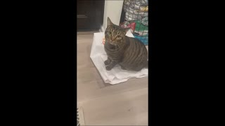 Cat Doesn't Want to Let Another Out of Bag an Sits on the Tip