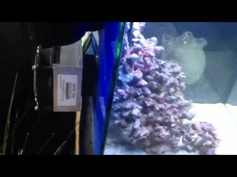 Fitting an ice probe chiller to an aquarium youtube for Fish tank calculator