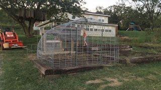 Chicken Run / Hoop House for under $100