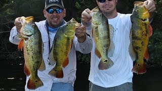 Peacock Bass Fishing Miami Florida with Eric and Captain Shane