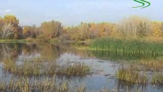 Твичинг на мелководье Алексей Шанин, 2009 Часть 1  Tiny Magallon