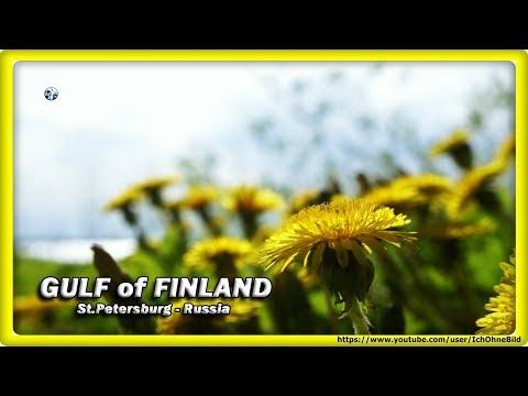 🔴 GULF of FINLAND • ST.PETERSBURG   RUSSIA - Фи́нский зали́в • Санкт-Петербург   Россия