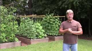 Raised Bed Garden Update 7 21 14