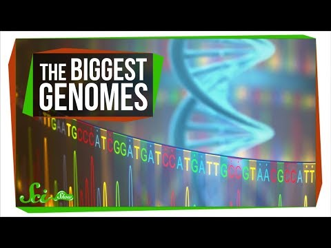 The Mystery of the Biggest Genomes