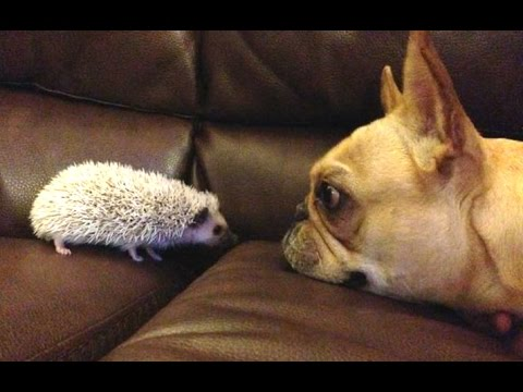 Thumbnail: Funny Dogs Meeting Cute Baby Animals Compilation [CUTE]
