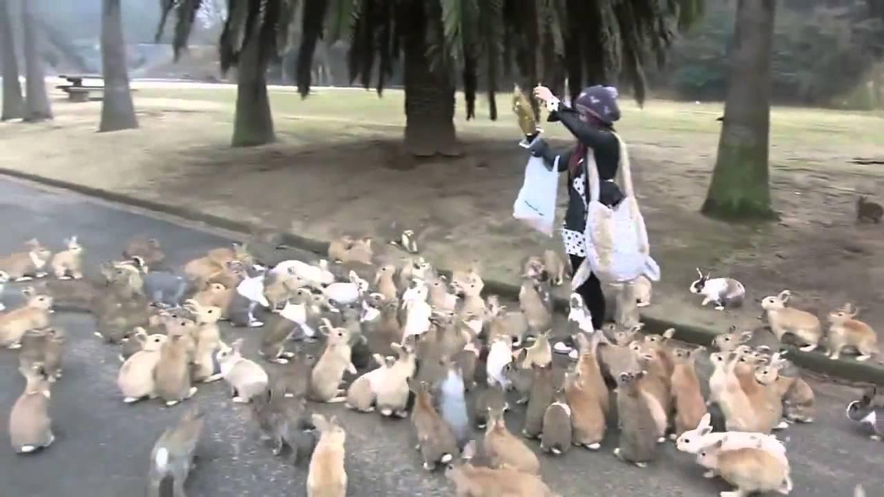 Des lapins affamés !