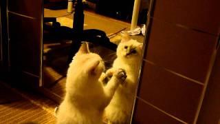 Cintra po drugiej stronie lustra