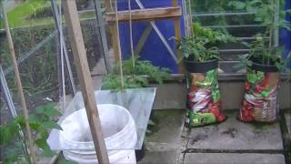 Allotment Journal - Greenhouses & Plot update 18th June 2016
