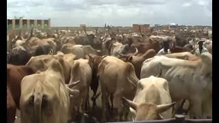 الإدارة العامة للثروة الحيوانية