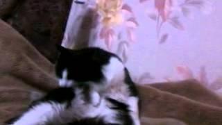 страшный фильм про кошку=)