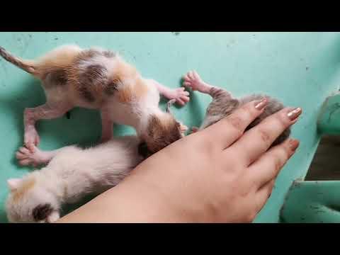 Kittens Truffle #CatLove #CuteCats #Relax #Cats