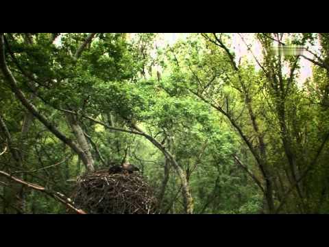 "Universum Dokumentation ""Wildnis am Strom - Nationalpark Donau-Auen"""
