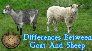 Differences Between Goat And Sheep | Saiful Chemistry